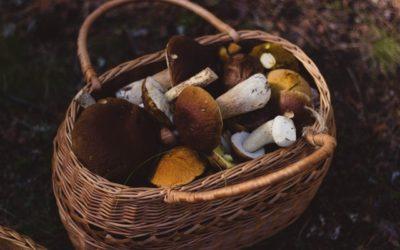 L'automne, saison des cèpes en Périgord Vert