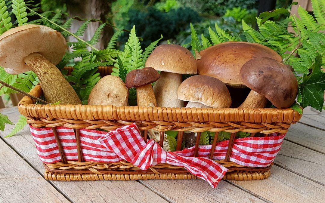 recettes d'automne aux cèpes de saison en Périgord