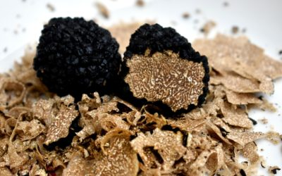 La truffe, patrimoine périgourdin